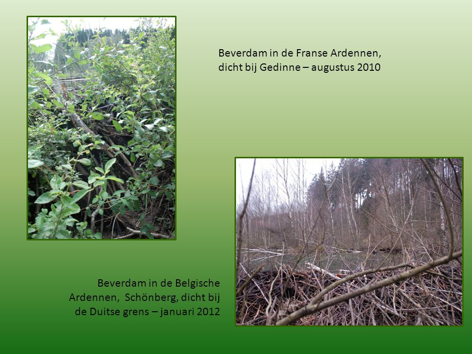 Beverdam in de Franse Ardennen, dicht bij Gedinne – augustus 2010 Beverdam in de Belgische Ardennen, Schönberg, dicht bij de Duitse grens – januari 20
