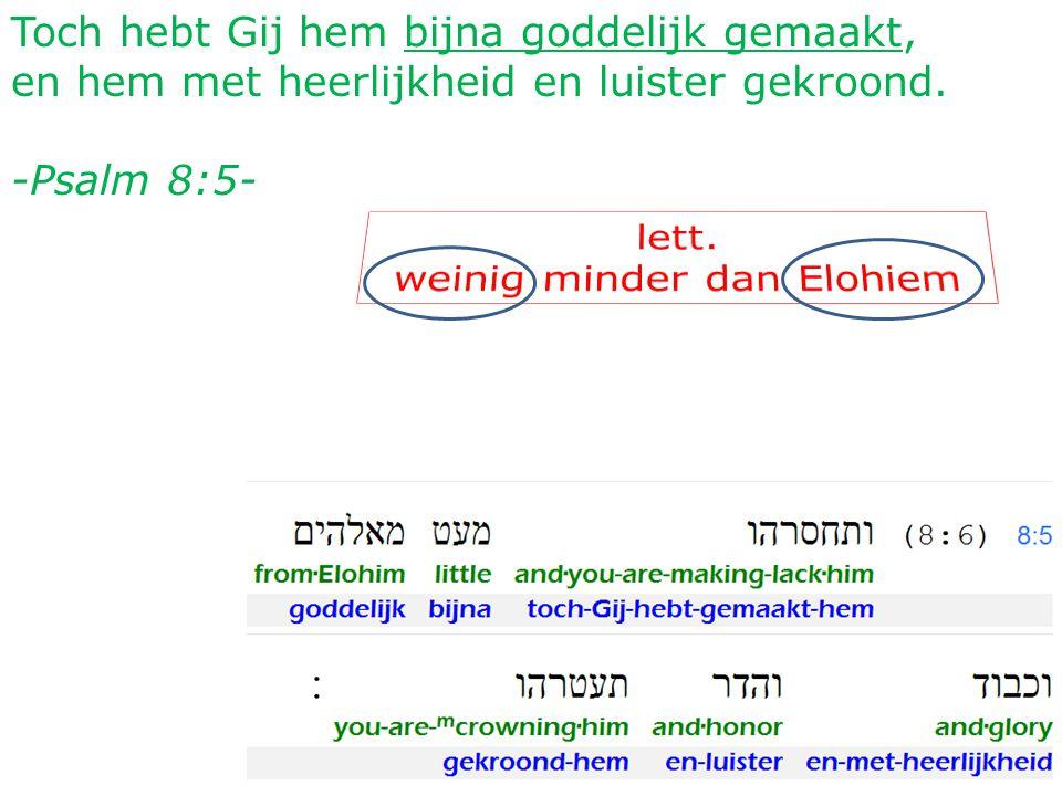 38 Toch hebt Gij hem bijna goddelijk gemaakt, en hem met heerlijkheid en luister gekroond.