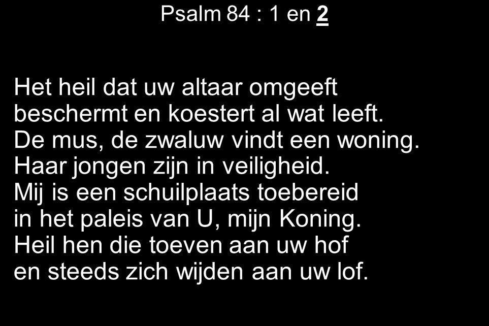Psalm 84 : 1 en 2 Het heil dat uw altaar omgeeft beschermt en koestert al wat leeft. De mus, de zwaluw vindt een woning. Haar jongen zijn in veilighei
