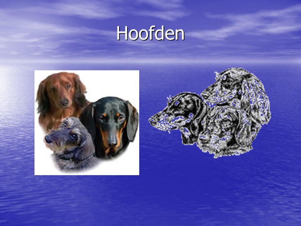 Hoofden