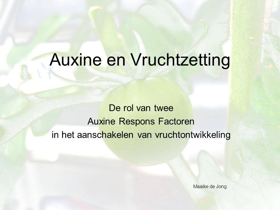 Auxine en Vruchtzetting De rol van twee Auxine Respons Factoren in het aanschakelen van vruchtontwikkeling Maaike de Jong