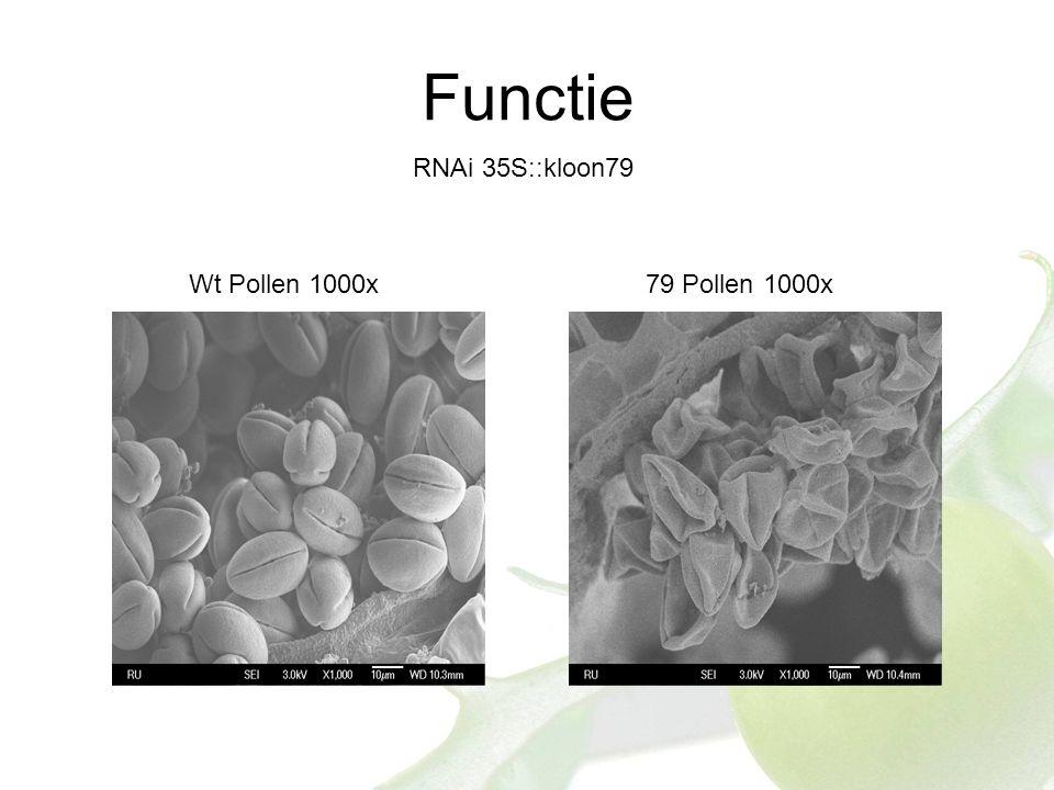 Functie RNAi 35S::kloon79 Wt Pollen 1000x79 Pollen 1000x