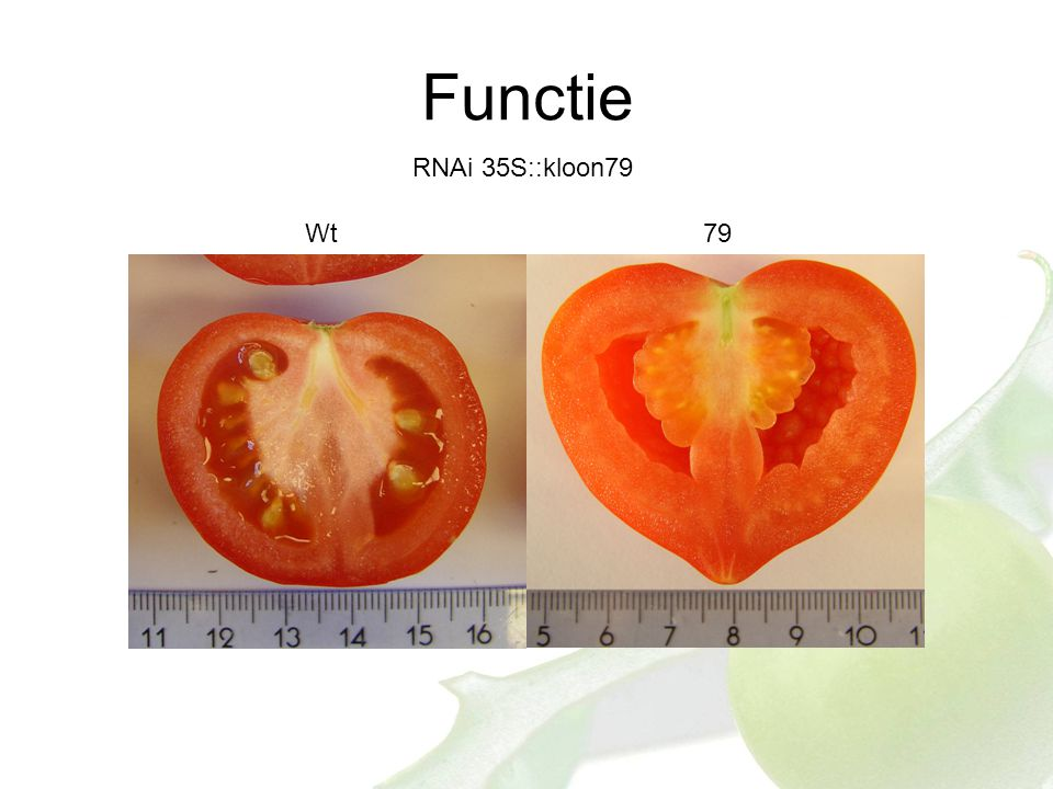 Functie RNAi 35S::kloon79 Wt79