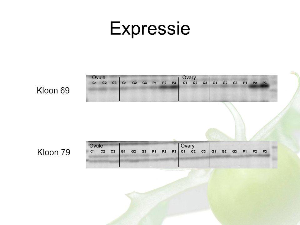 Expressie Kloon 69 Kloon 79