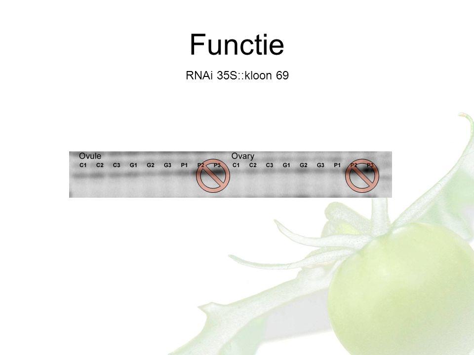 Functie RNAi 35S::kloon 69