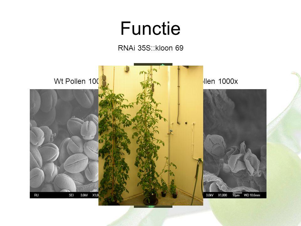 Functie RNAi 35S::kloon 69 Wt Pollen 1000x69 Pollen 1000x