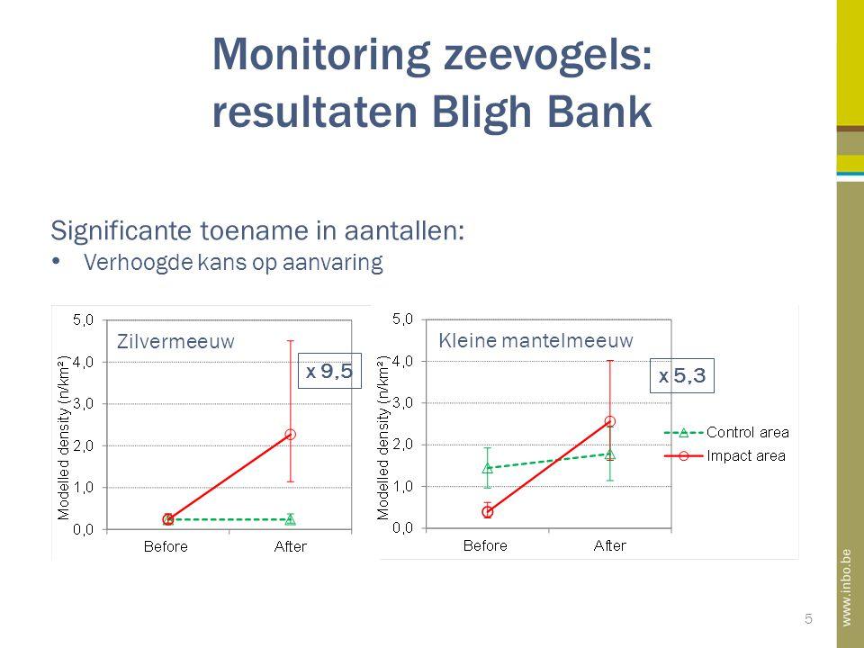 Monitoring zeevogels: resultaten Bligh Bank 5 Significante toename in aantallen: Verhoogde kans op aanvaring x 9,5 x 5,3 Zilvermeeuw Kleine mantelmeeuw