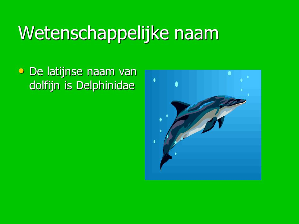 Wetenschappelijke naam De latijnse naam van dolfijn is Delphinidae De latijnse naam van dolfijn is Delphinidae