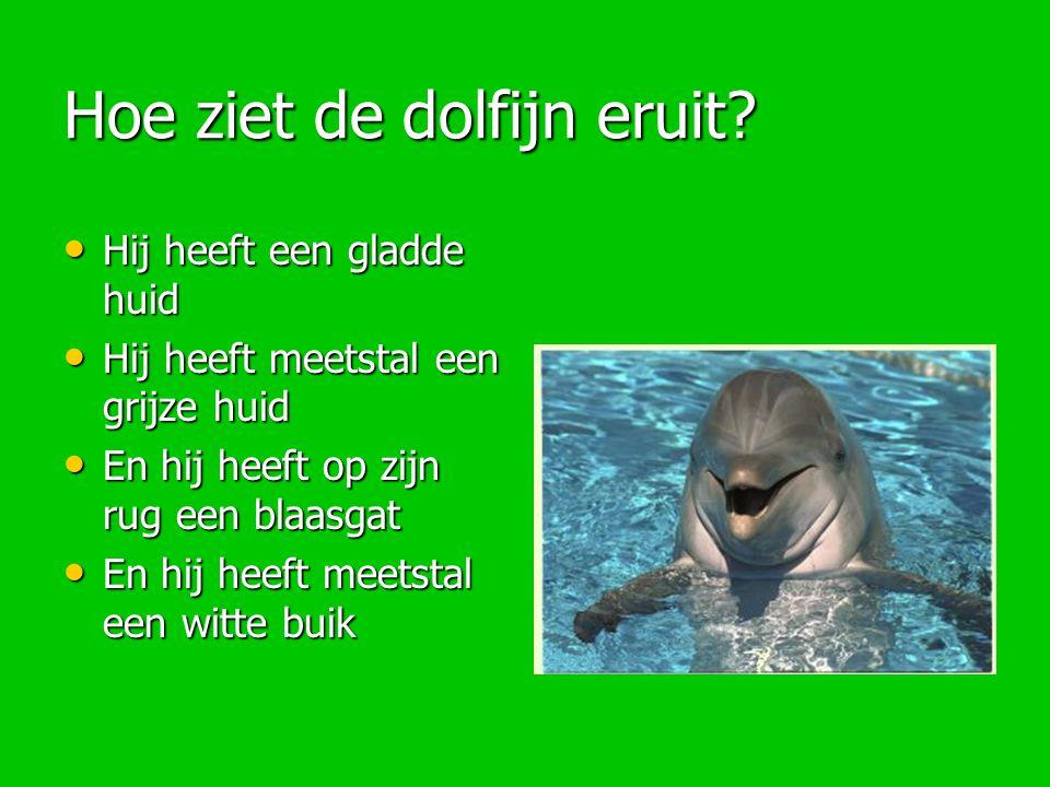 Hoe ziet de dolfijn eruit? Hij heeft een gladde huid Hij heeft een gladde huid Hij heeft meetstal een grijze huid Hij heeft meetstal een grijze huid E