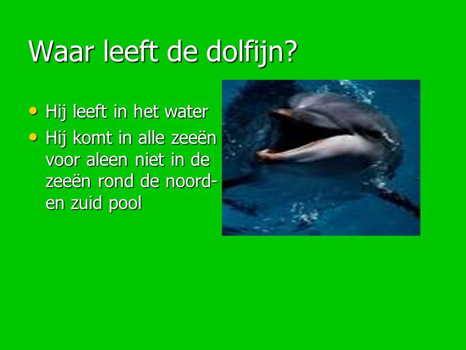 Waar leeft de dolfijn? Hij leeft in het water Hij leeft in het water Hij komt in alle zeeën voor aleen niet in de zeeën rond de noord- en zuid pool Hi