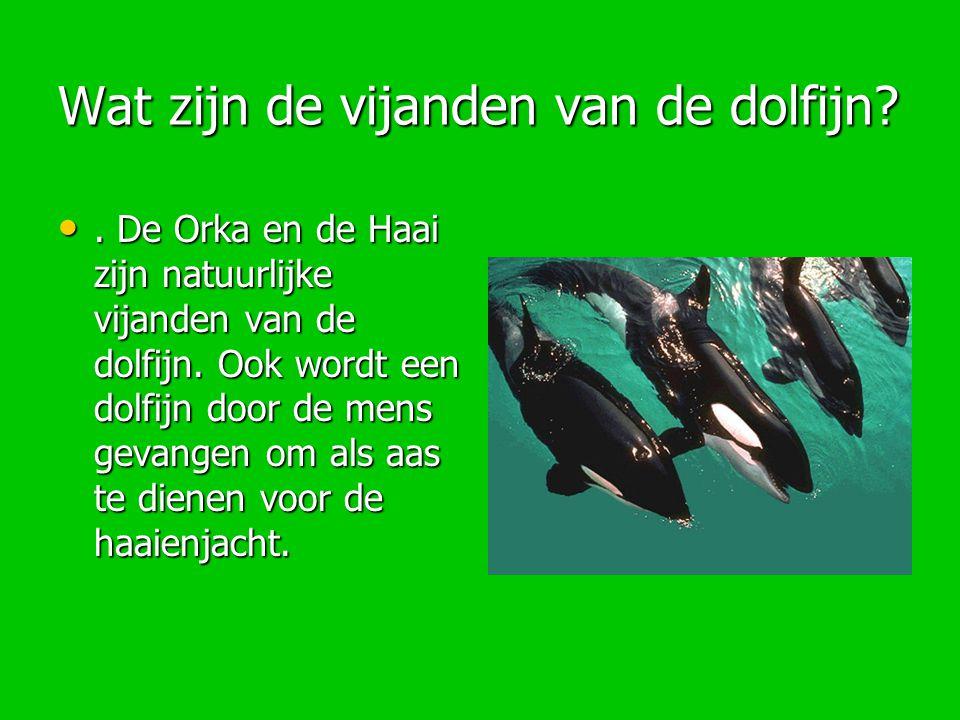 Wat zijn de vijanden van de dolfijn?. De Orka en de Haai zijn natuurlijke vijanden van de dolfijn. Ook wordt een dolfijn door de mens gevangen om als