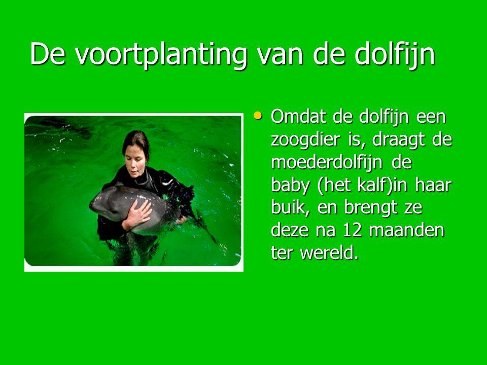 De voortplanting van de dolfijn Omdat de dolfijn een zoogdier is, draagt de moederdolfijn de baby (het kalf)in haar buik, en brengt ze deze na 12 maan