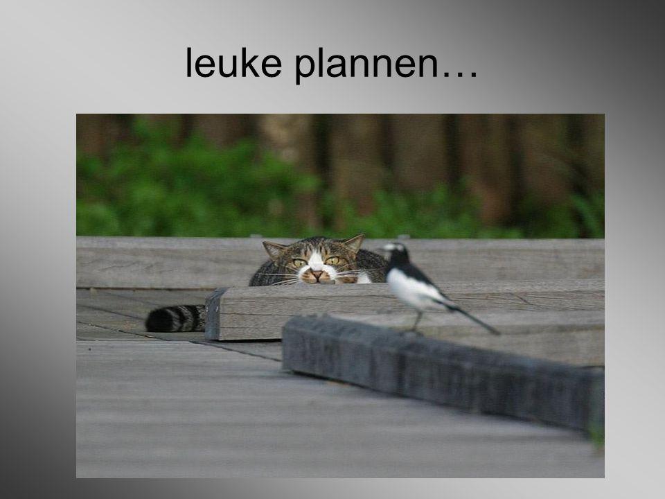 leuke plannen…