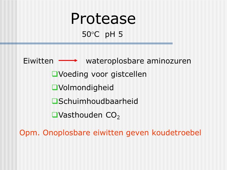 Protease 50°C pH 5 Eiwitten wateroplosbare aminozuren  Voeding voor gistcellen  Volmondigheid  Schuimhoudbaarheid  Vasthouden CO 2 Opm. Onoplosbar