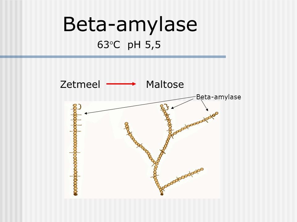 Beta-amylase 63°C pH 5,5 Zetmeel Maltose Beta-amylase