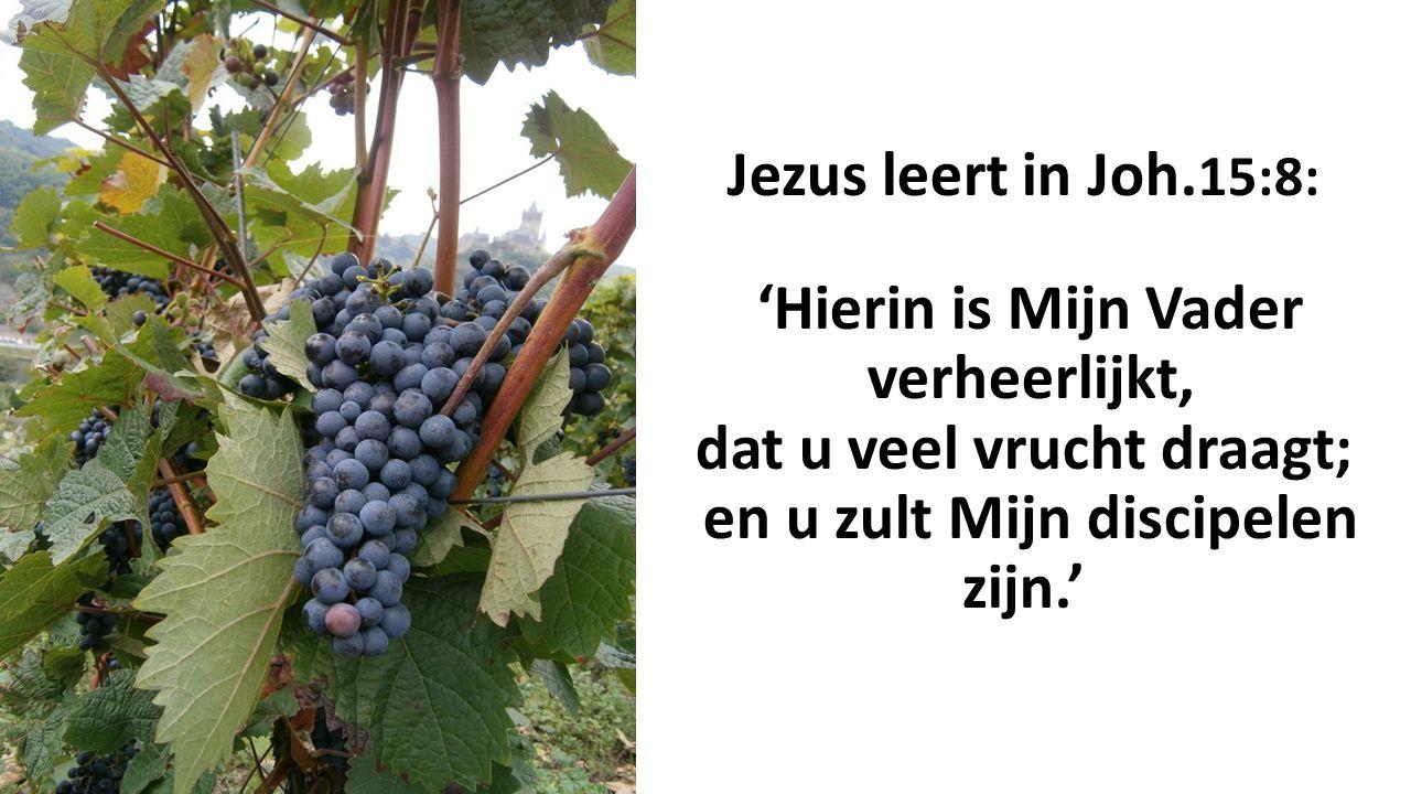 Jezus leert in Joh. 15:8: 'Hierin is Mijn Vader verheerlijkt, dat u veel vrucht draagt; en u zult Mijn discipelen zijn.'