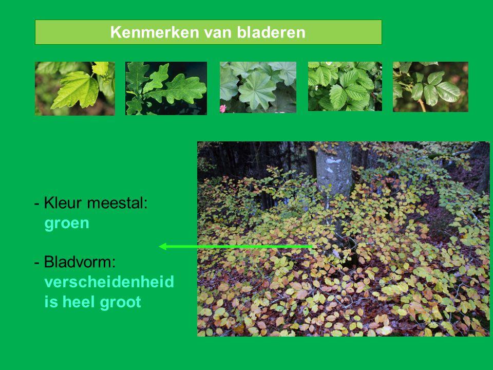 Kenmerken van bladeren - Kleur meestal: - Bladvorm: groen verscheidenheid is heel groot