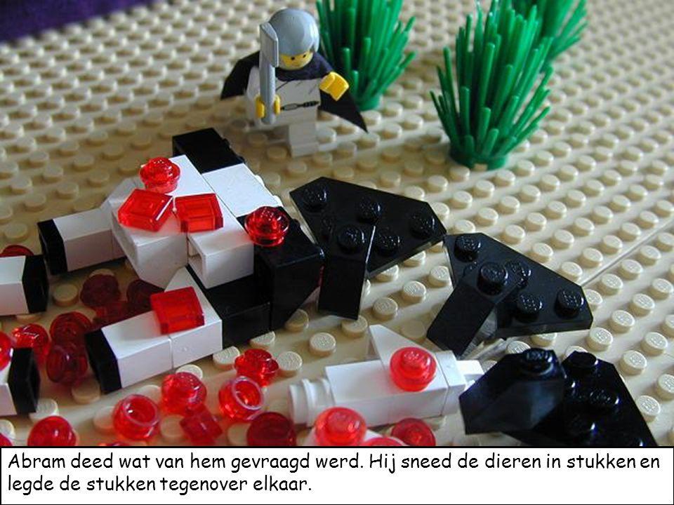 Abram deed wat van hem gevraagd werd. Hij sneed de dieren in stukken en legde de stukken tegenover elkaar.