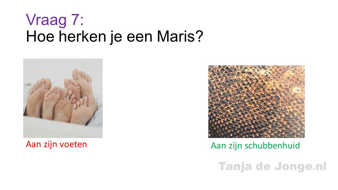 Tanja de Jonge. nl Vraag 7: Hoe herken je een Maris? Aan zijn voeten Aan zijn schubbenhuid