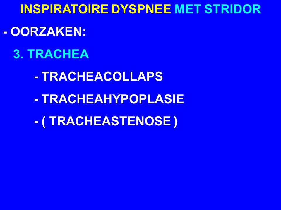 COLLAPS VAN DE LARYNX - LARYNXCOLLAPS = LARYNXPARALYSE - COLLAPS = EINDFASE BRACHYCEFALEN- SYNDROOM - BRACHYCEFALENSYNDROOM = INSPIRATOIRE DYSPNEE MET STRIDOR TGV MEERDERE PROBLEMEN: NAUWE NEUSOPENINGEN, VERLENGD GEHEMELTE, TRACHEAHYPOPLASIE,...
