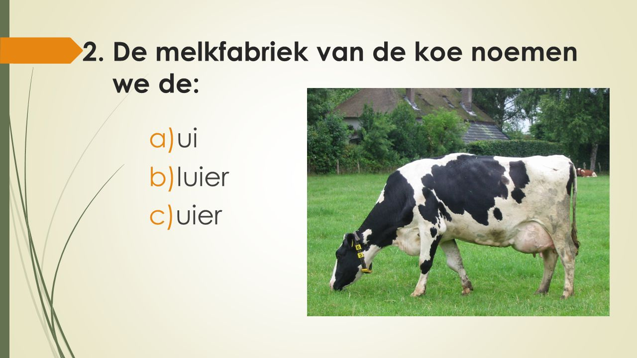 2. De melkfabriek van de koe noemen we de: a)ui b)luier c)uier