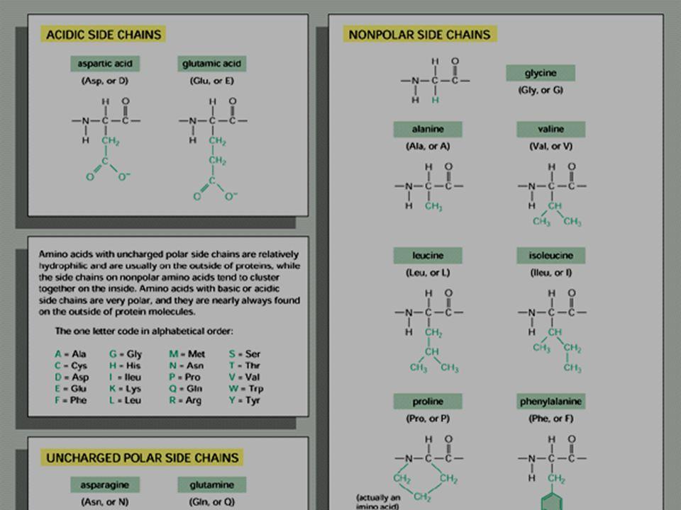 Circulair dichroisme Circulair dicroisme (CD): verschil in absorptie tussen links en rechts gepolariseerd licht.