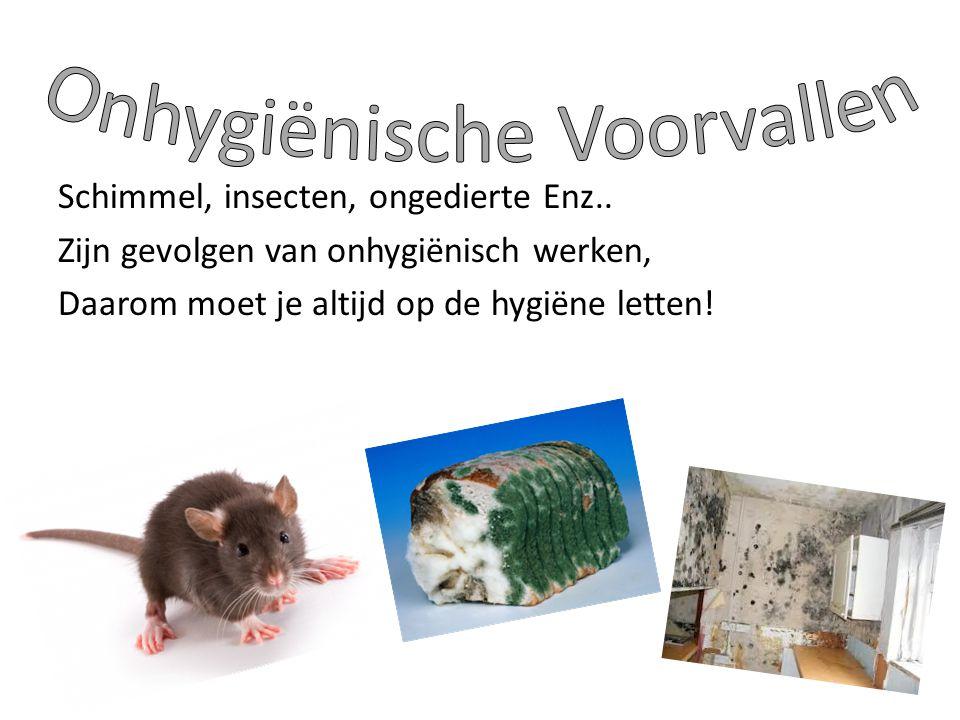 Schimmel, insecten, ongedierte Enz.. Zijn gevolgen van onhygiënisch werken, Daarom moet je altijd op de hygiëne letten!