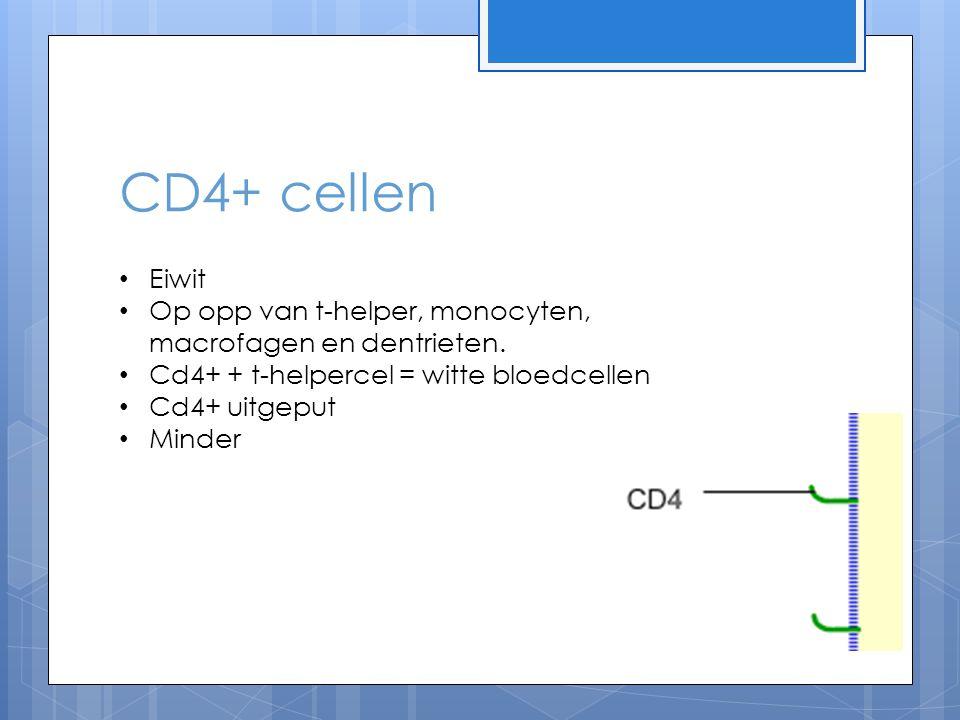 CD4+ cellen Eiwit Op opp van t-helper, monocyten, macrofagen en dentrieten. Cd4+ + t-helpercel = witte bloedcellen Cd4+ uitgeput Minder