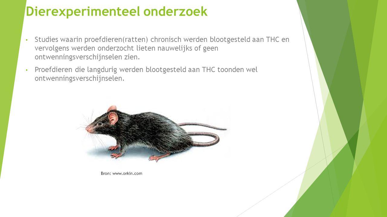 Dierexperimenteel onderzoek Studies waarin proefdieren(ratten) chronisch werden blootgesteld aan THC en vervolgens werden onderzocht lieten nauwelijks of geen ontwenningsverschijnselen zien.