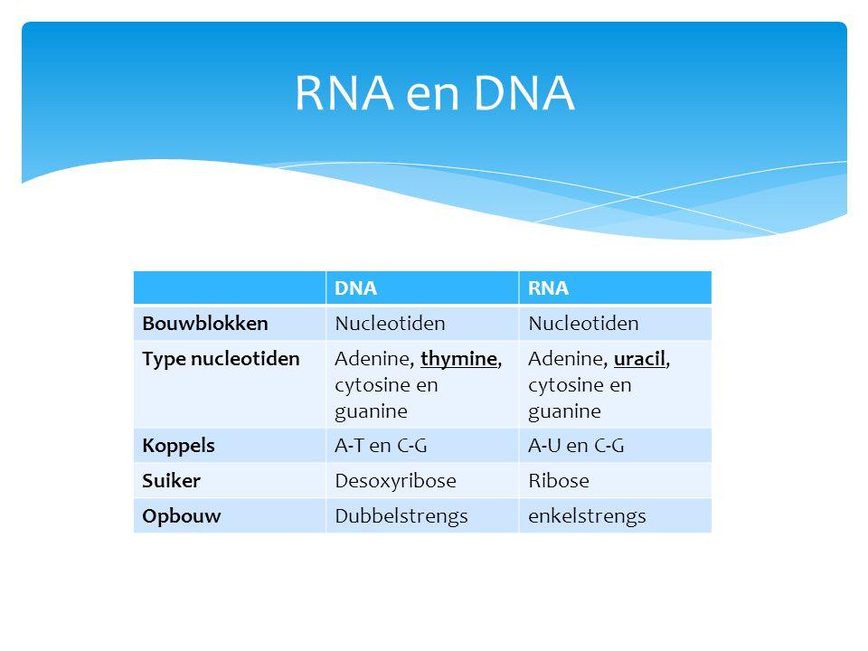 RNA en DNA DNARNA BouwblokkenNucleotiden Type nucleotidenAdenine, thymine, cytosine en guanine Adenine, uracil, cytosine en guanine KoppelsA-T en C-GA