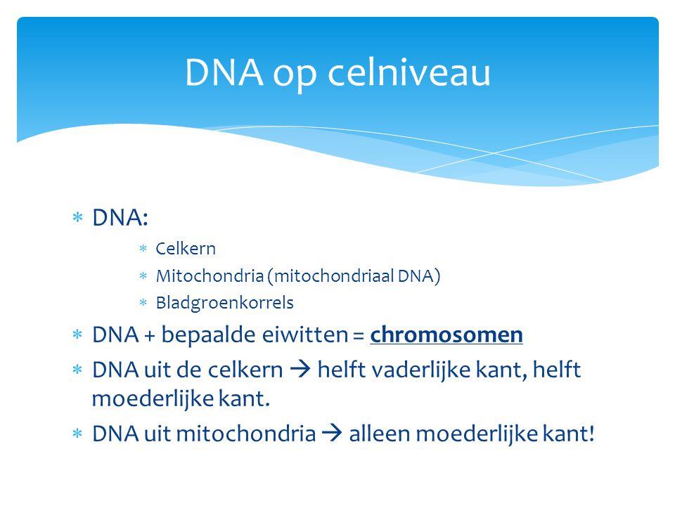  DNA:  Celkern  Mitochondria (mitochondriaal DNA)  Bladgroenkorrels  DNA + bepaalde eiwitten = chromosomen  DNA uit de celkern  helft vaderlijk