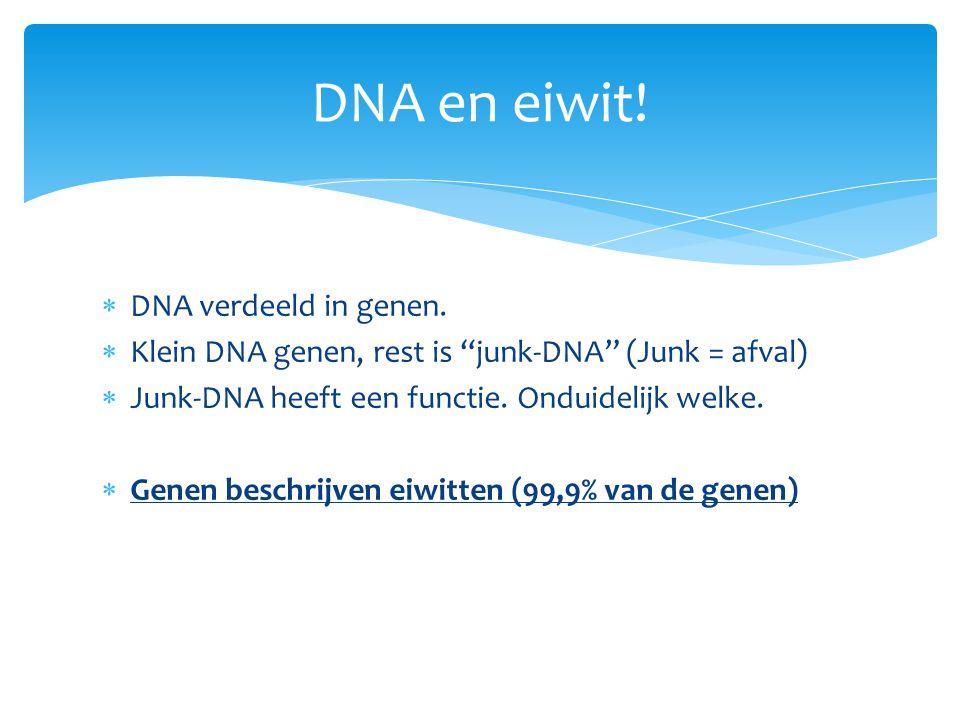 """ DNA verdeeld in genen.  Klein DNA genen, rest is """"junk-DNA"""" (Junk = afval)  Junk-DNA heeft een functie. Onduidelijk welke.  Genen beschrijven eiw"""