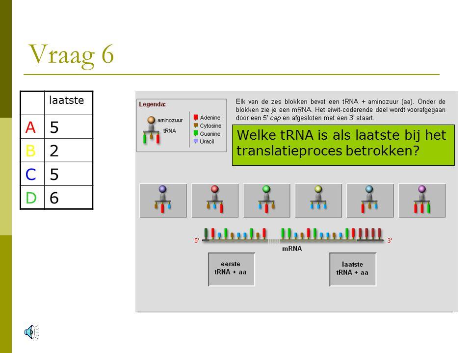 Vraag 6 Welke tRNA is als laatste bij het translatieproces betrokken laatste A5 B2 C5 D6