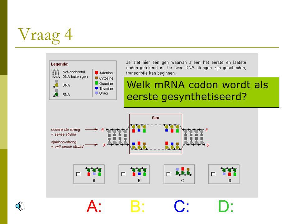 Vraag 4 A: B: C: D: Welk mRNA codon wordt als eerste gesynthetiseerd