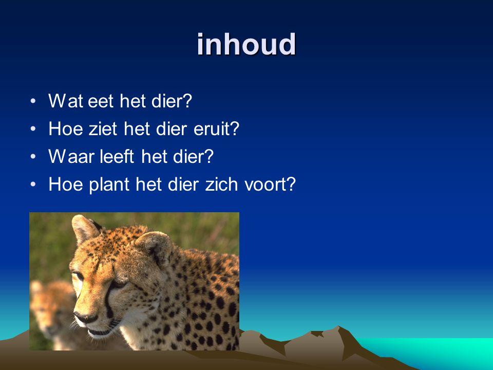 inhoud Wat eet het dier? Hoe ziet het dier eruit? Waar leeft het dier? Hoe plant het dier zich voort?