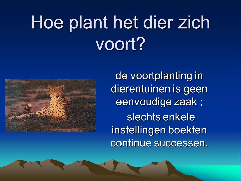 Hoe plant het dier zich voort? de voortplanting in dierentuinen is geen eenvoudige zaak ; slechts enkele instellingen boekten continue successen. slec