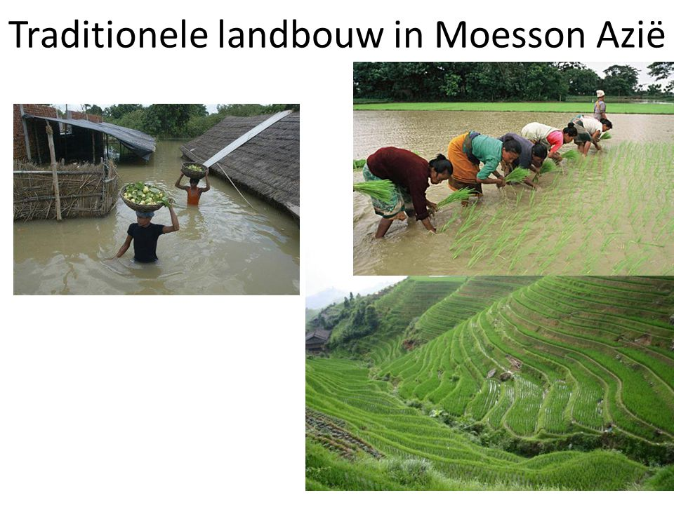 Traditionele landbouw in Moesson Azië