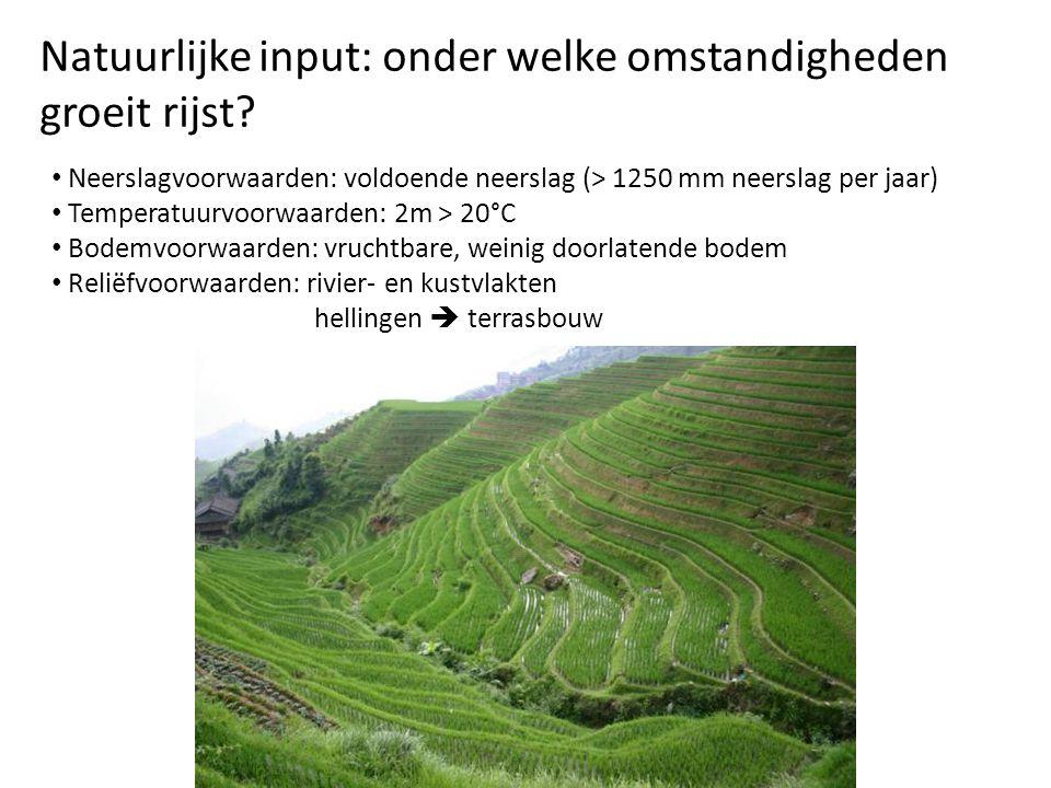 Natuurlijke input: onder welke omstandigheden groeit rijst? Neerslagvoorwaarden: voldoende neerslag (> 1250 mm neerslag per jaar) Temperatuurvoorwaard