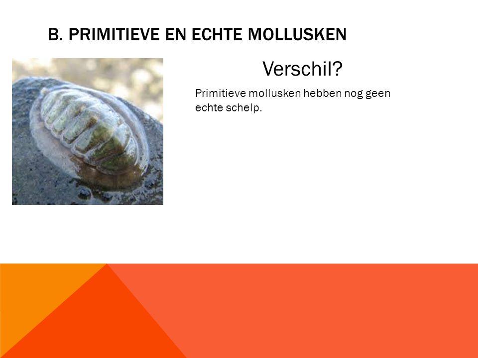 B. PRIMITIEVE EN ECHTE MOLLUSKEN Verschil? Primitieve mollusken hebben nog geen echte schelp.