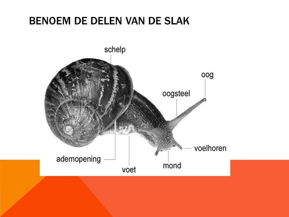 BENOEM DE DELEN VAN DE SLAK