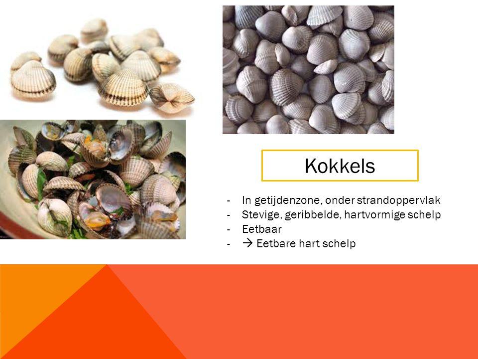 Kokkels -In getijdenzone, onder strandoppervlak -Stevige, geribbelde, hartvormige schelp -Eetbaar -  Eetbare hart schelp
