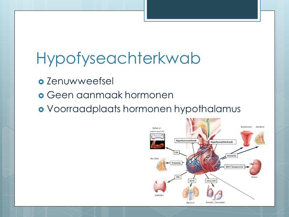 Hypofyseachterkwab  Zenuwweefsel  Geen aanmaak hormonen  Voorraadplaats hormonen hypothalamus