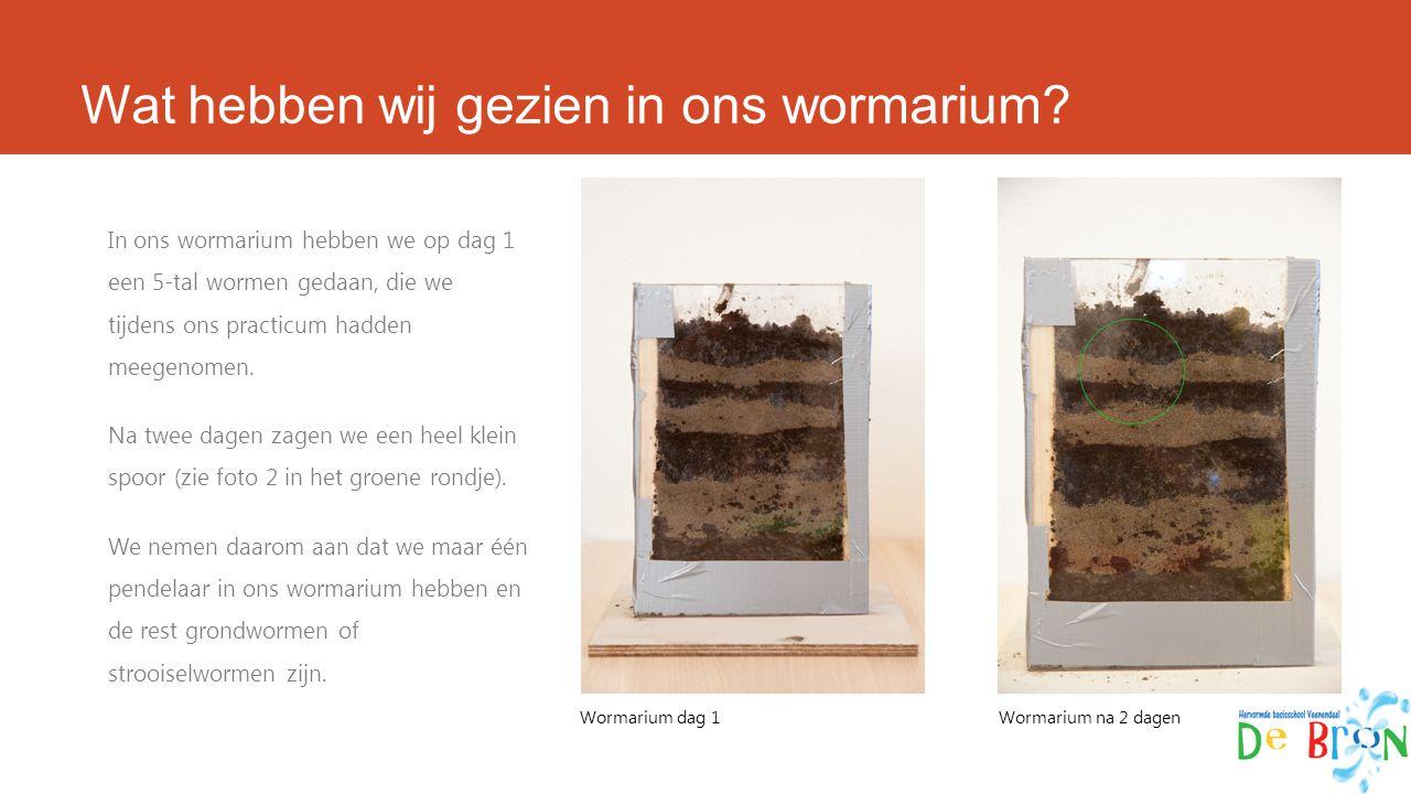 Wat hebben wij gezien in ons wormarium? In ons wormarium hebben we op dag 1 een 5-tal wormen gedaan, die we tijdens ons practicum hadden meegenomen. N