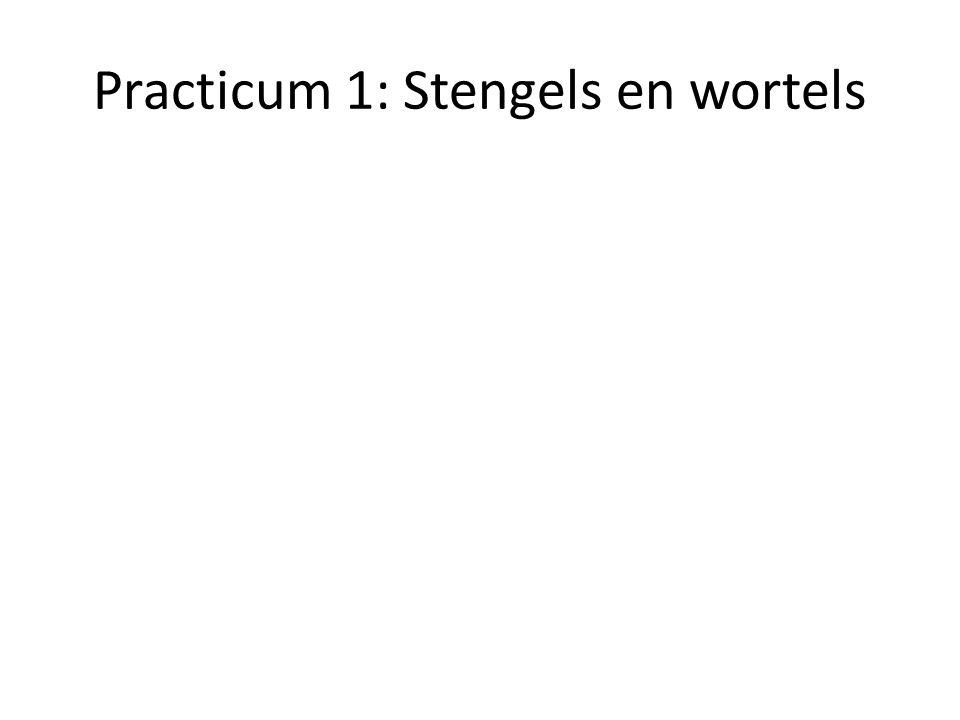 Practicum 1: Stengels en wortels