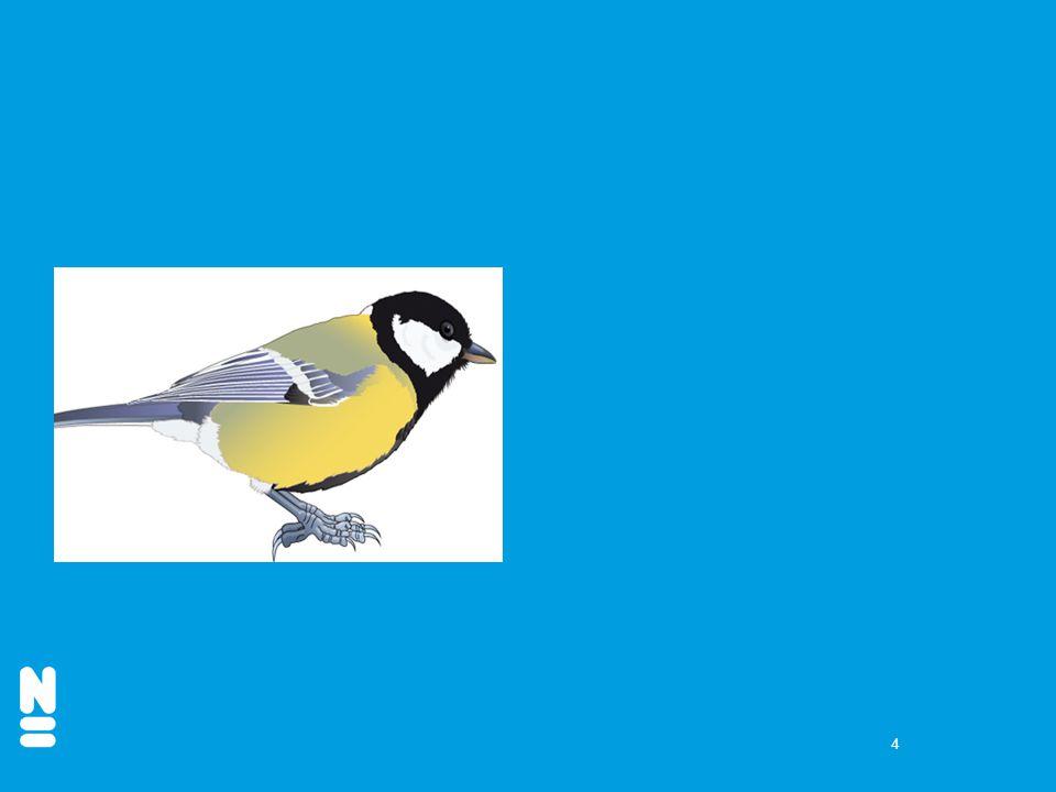 15 7. Zijn dit zanglijsters of spreeuwen?