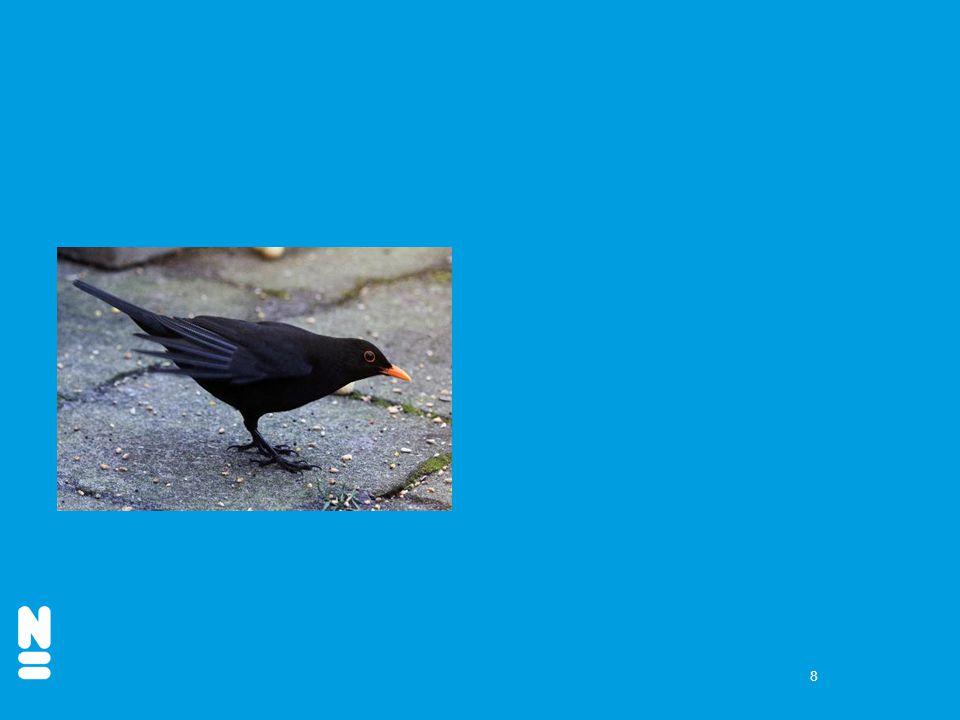 9 4. Welke vogel is nieuw in Nederland?