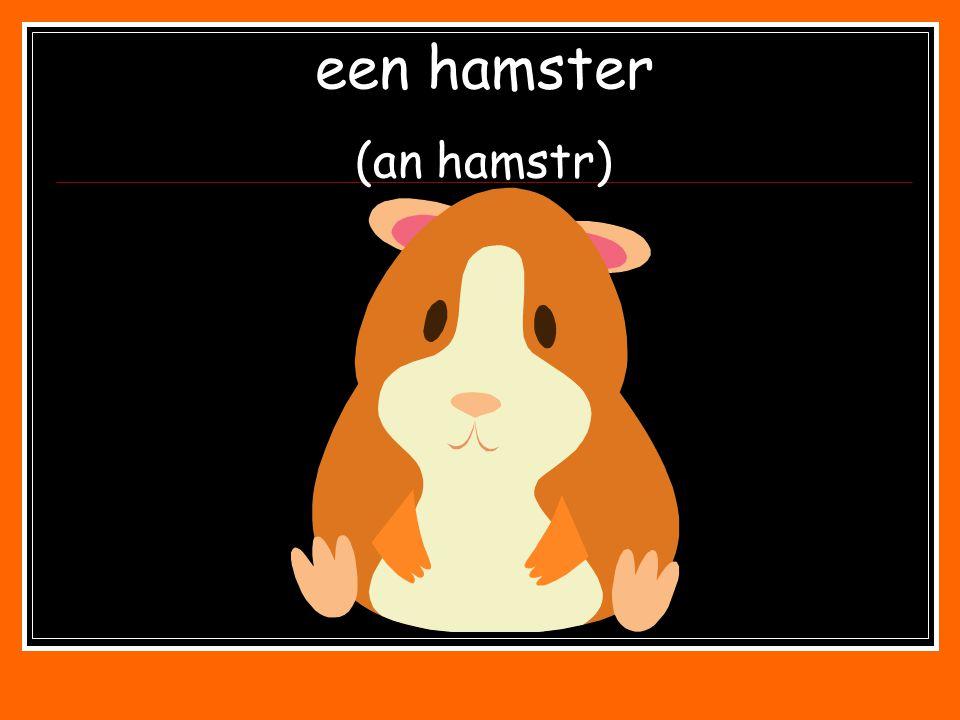 een hamster (an hamstr)
