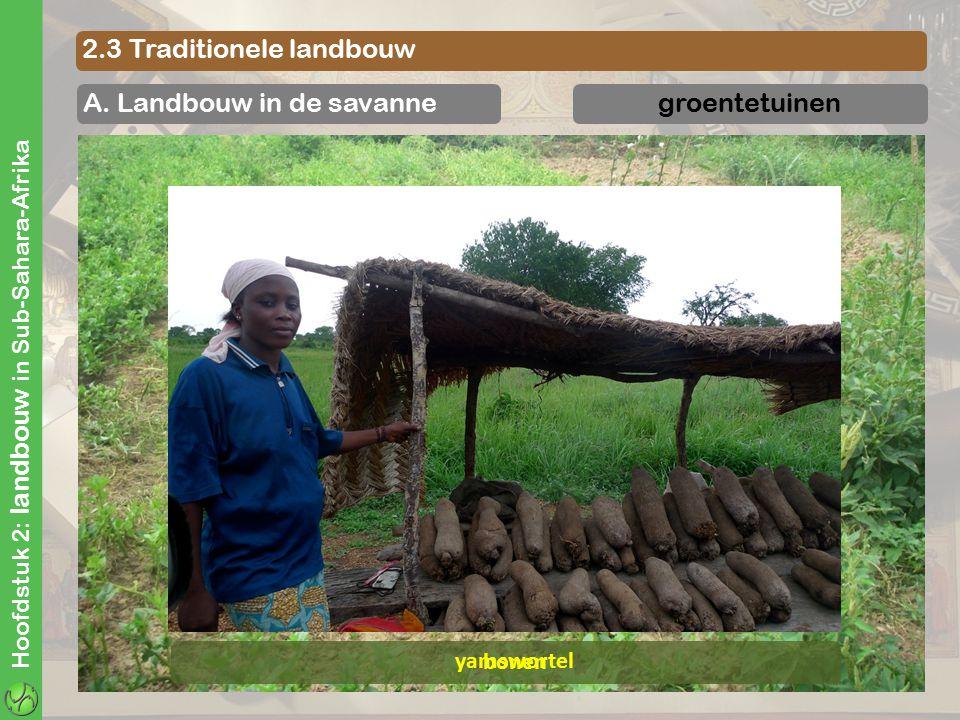 Hoofdstuk 2: landbouw in Sub-Sahara-Afrika 2.3 Traditionele landbouw A. Landbouw in de savannegroentetuinen yamswortel bonen