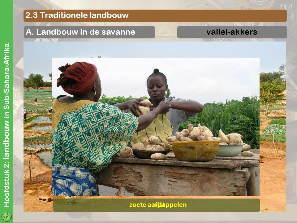 Hoofdstuk 2: landbouw in Sub-Sahara-Afrika 2.3 Traditionele landbouw A. Landbouw in de savannevallei-akkers rijstzoete aardappelen