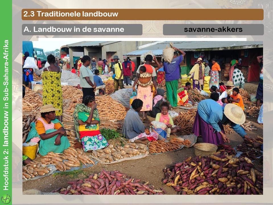 Hoofdstuk 2: landbouw in Sub-Sahara-Afrika 2.3 Traditionele landbouw A. Landbouw in de savannesavanne-akkers maniok maissorghumgierstaardnoten